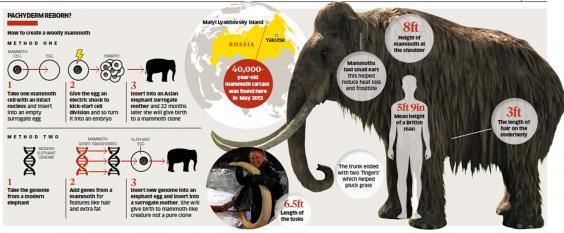 mammoth-graph.jpg