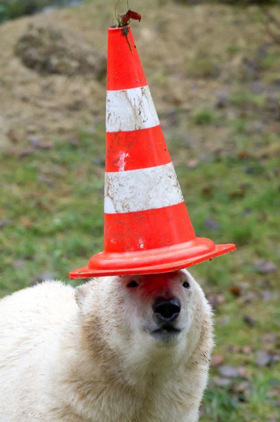 polar-bear-twins3.jpg