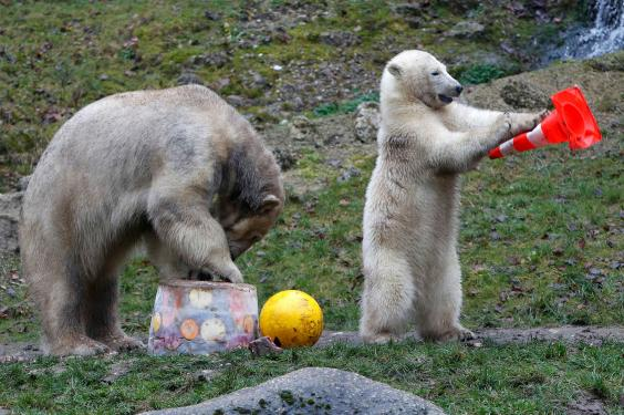 polar-bear-twins5.jpg