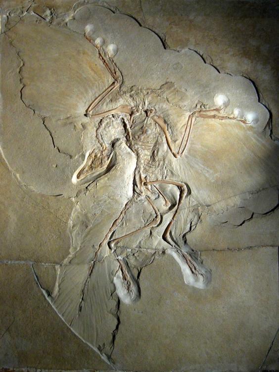 fossil-reuters2.jpg