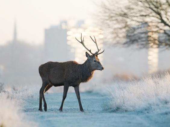 winter-UK-9_1.jpg