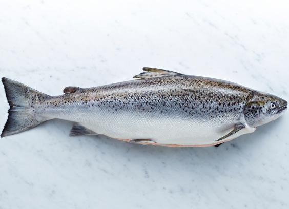 6-Salmon.jpg