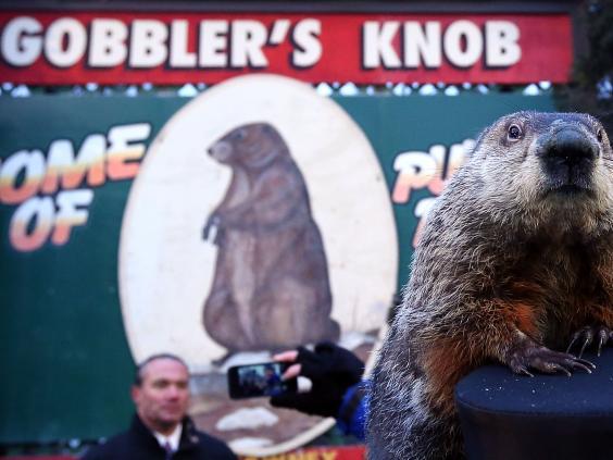 groundhog-phil-getty.jpg