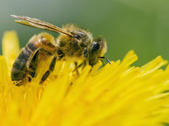 15-Bees-Rex.jpg