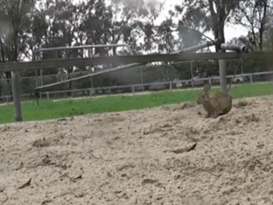 Greyhound-baiting2.jpg