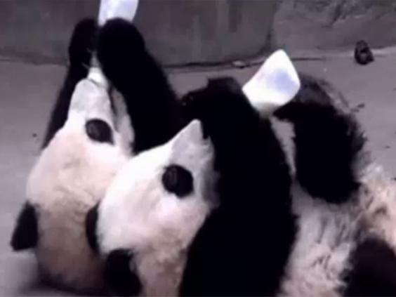 Panda-population.jpg