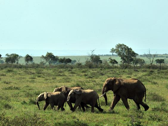 Elephant-appeal-5.jpg