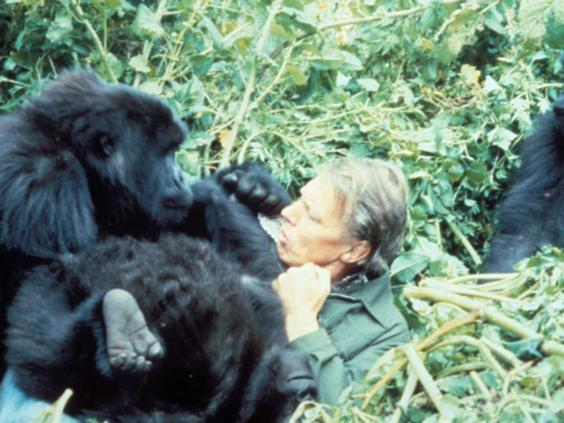 3-Attenborough-Gorillas1-AFP.jpg
