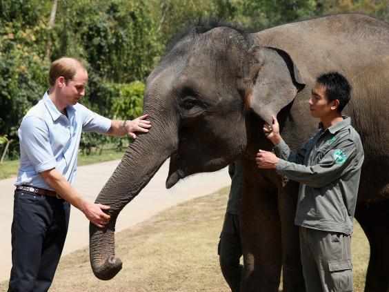 William-elephant-landscape-Getty.jpg