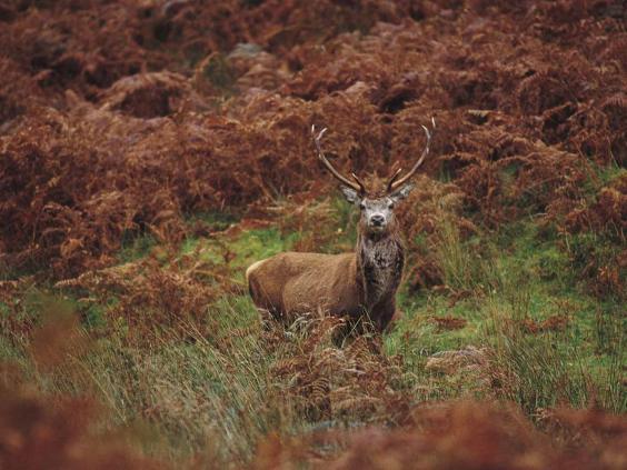 deer_visit_scotland.jpg