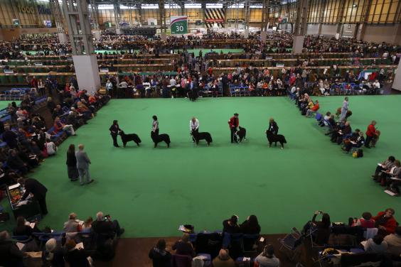 Crufts Second Day.jpg