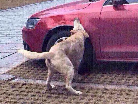 dog1-rex.jpg