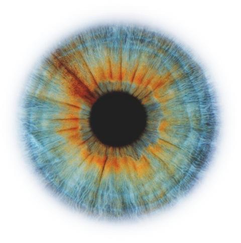RANKIN-Eyescape.jpeg