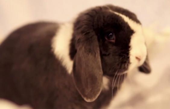 rabbitbrunel.jpg