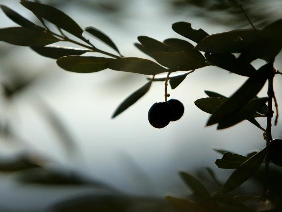 olives-afp-getty.jpg