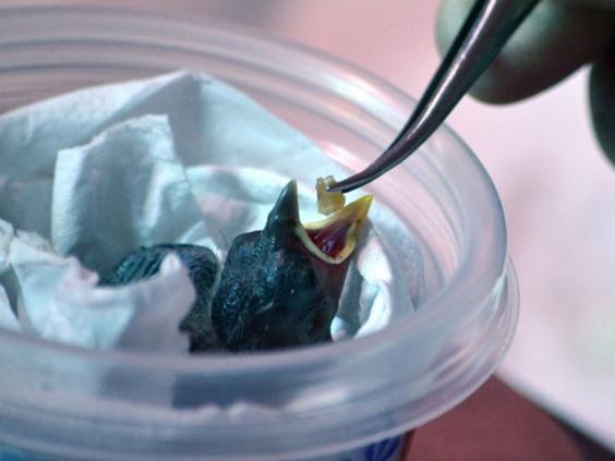 14-Finch-Feeding-LizaDíazLálova.jpg