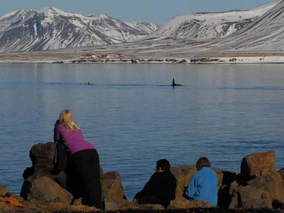 iceland_whale_harlow.jpg