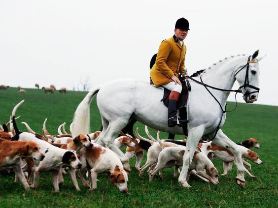 fox-hunting-getty.jpg