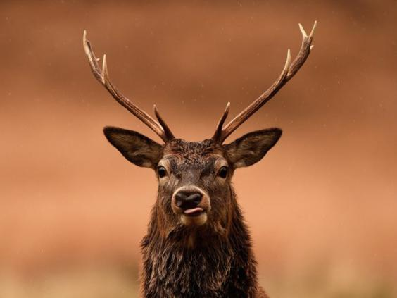 29-Red-Deer-AP.jpg