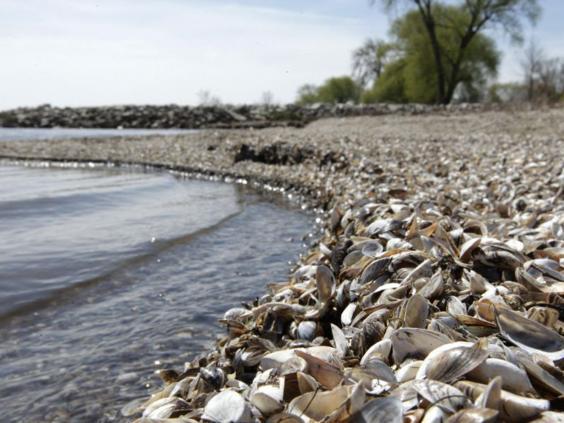 30-Mussels-Alamy.jpg