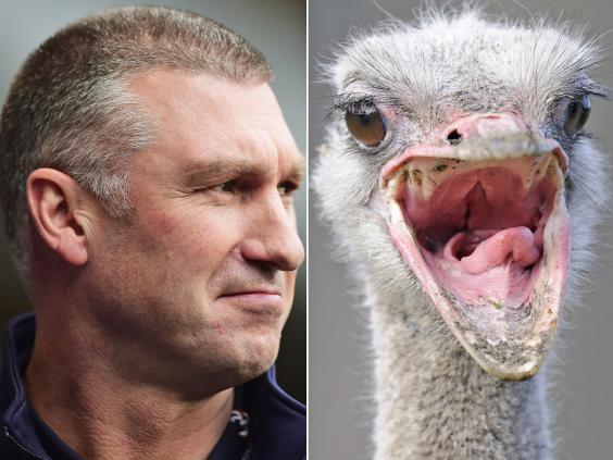 web-pearson-ostrich-getty.jpg