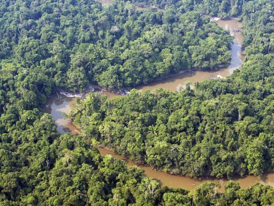 amazon-rainforest-afp.jpg