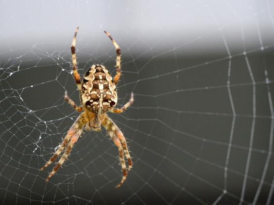 orb-spider-web-getty.jpg