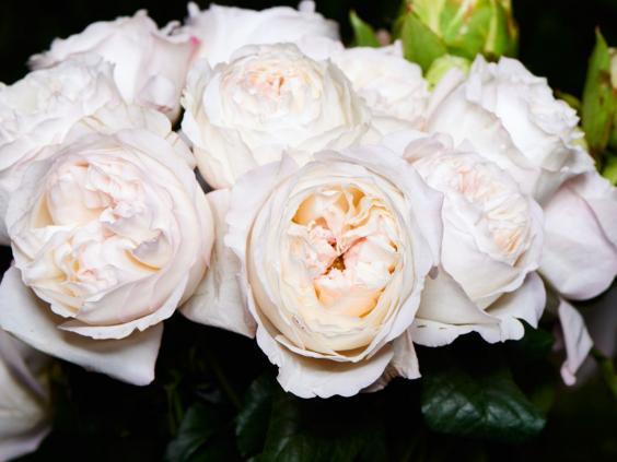 15-Garden-Roses-MT.jpg