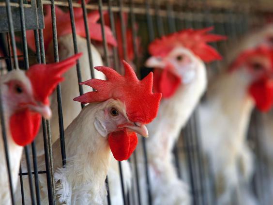 animals-farm.jpg