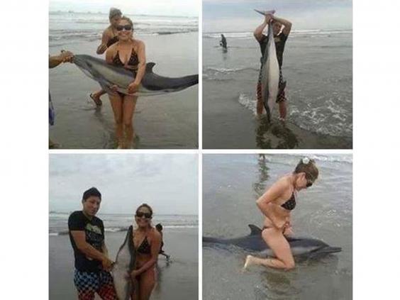 dolphin-beachd.jpg