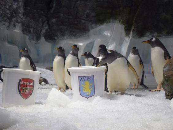 FA-Cup-penguin-predictions-(2).jpg