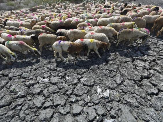 India-heatwave8.jpg