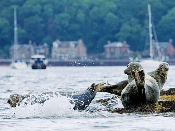 argyll-seals.jpg