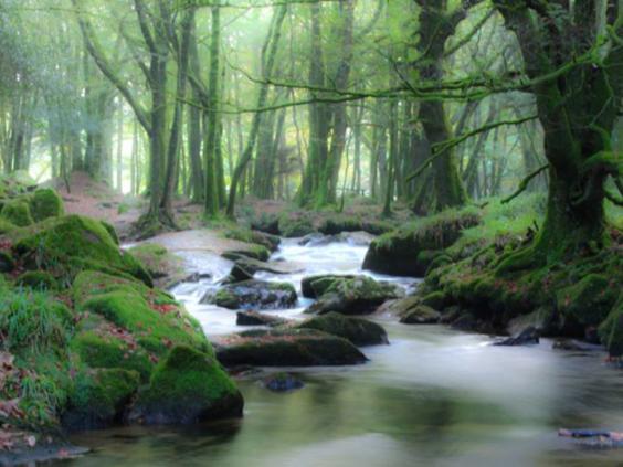 23-River-Fowey-LeeAllanKanePhotography.jpg