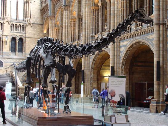 1280px-Diplodocus_(replica).001_-_London.JPG