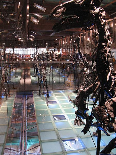 450px-Musée_des_Sciences_naturelles.JPG