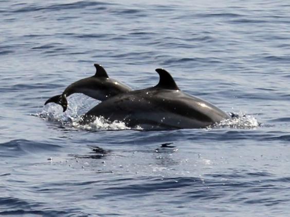 AN72854330A-blue-white-dolp.jpg