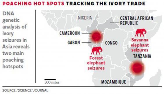 19-Ivory-Graphic.jpg