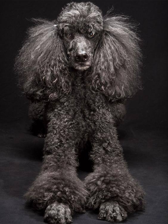 black-dog-project-10.jpg