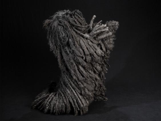 black-dog-project-2.jpg