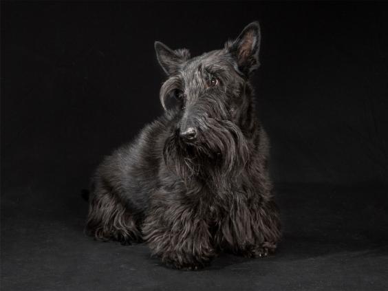 black-dog-project-3.jpg
