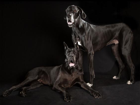 black-dog-project-7.jpg
