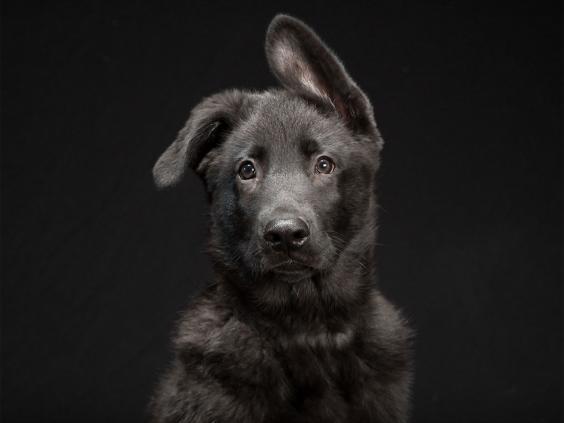 black-dog-project-8.jpg