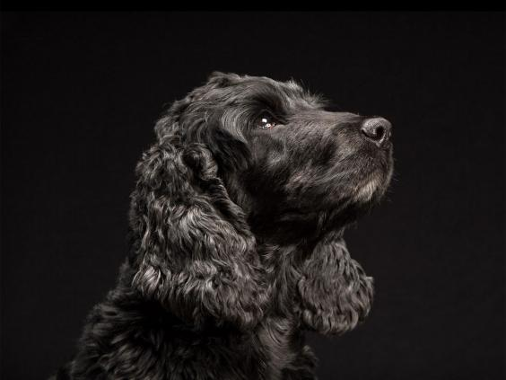 black-dog-project-9.jpg