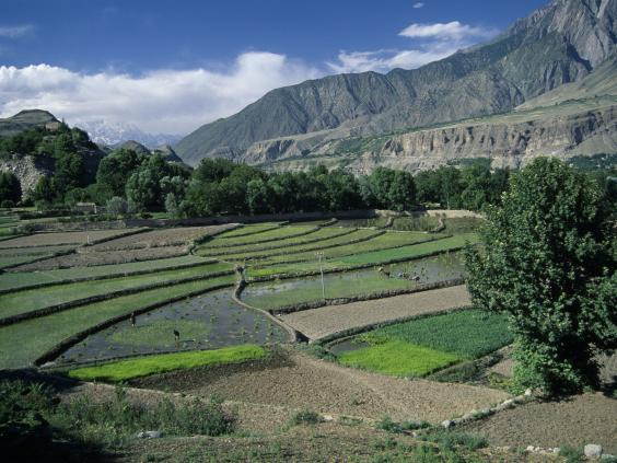 33-rice-terraces-Rex.jpg