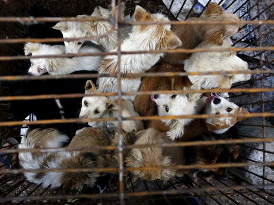 25-China-Dogs-Reuters.jpg