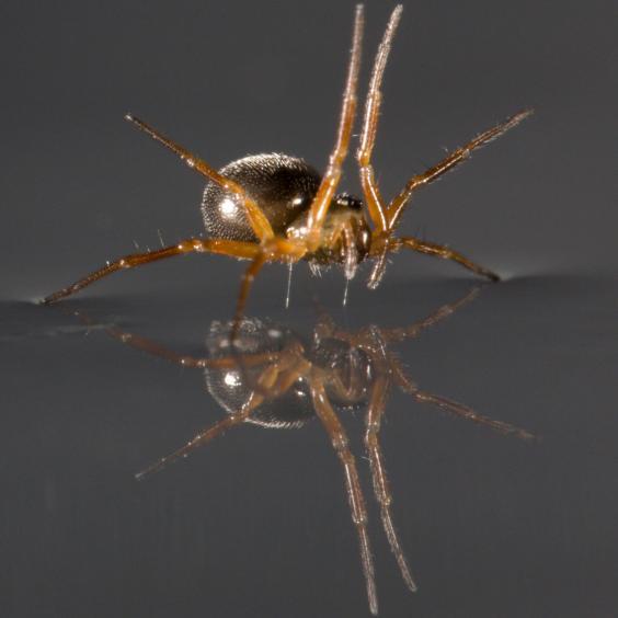 spiders-pa2_1.jpg