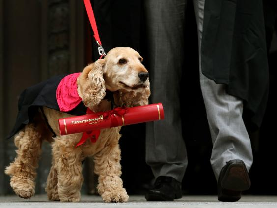 dog-graduation-pa2.jpg