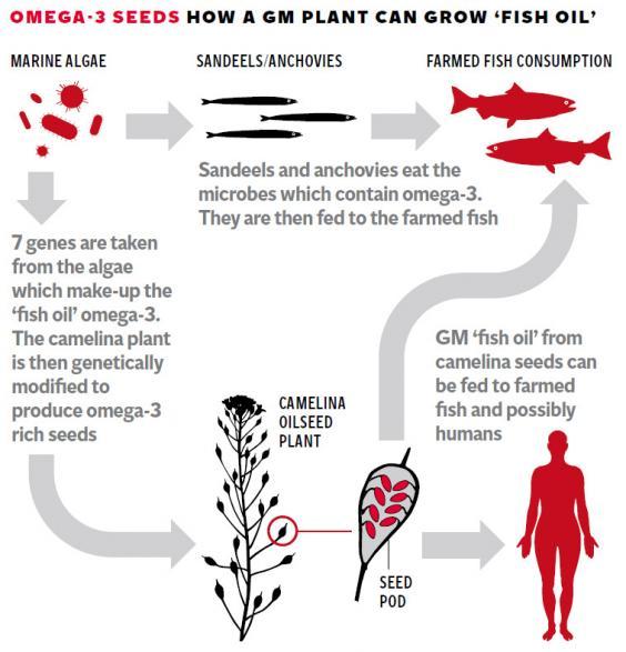 web-fish-oil-graphic.jpg