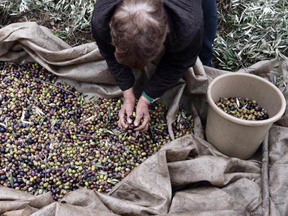 web-greece-olives-2-getty.jpg